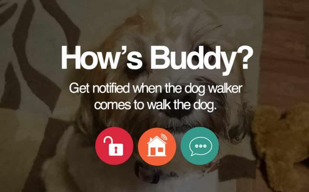 Alula App Dog Walker